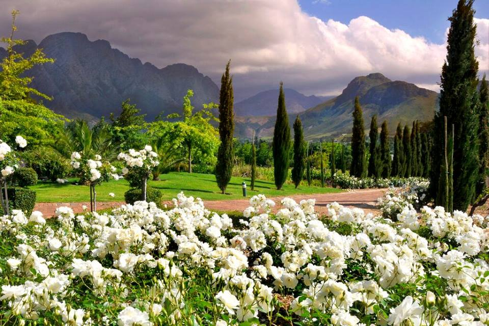 The Magnificient Region Of Western Cape Nature