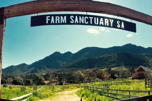 Farm Sanctuary